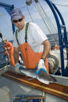 Atlantic Sharpnose Shark Tagging