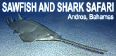 Sawfish Diving