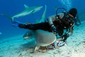 Shark Feeder with reef sharks