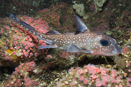 The place that is: Blogspot Exclusive- The Ratfish!