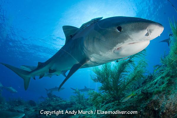 Shark talk, website updates, shark conservation rants